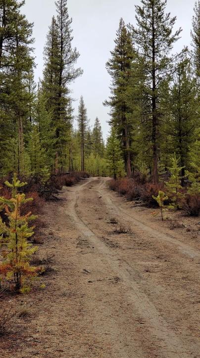 Outback trail.jpg